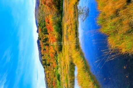 栗駒山 紅葉の湿原の写真素材 [FYI02099533]