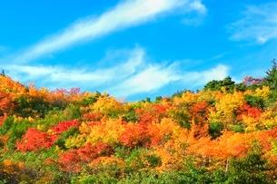 栗駒山 須川高原の紅葉の写真素材 [FYI02099537]