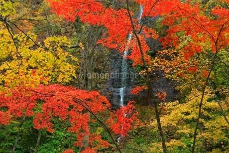 奥入瀬渓流の紅葉と不老の滝の写真素材 [FYI02099558]