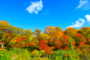 八幡平アスピーテラインの紅葉の写真素材 [FYI02099607]