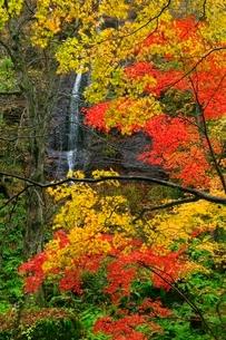 奥入瀬渓流の紅葉と不老の滝の写真素材 [FYI02099689]