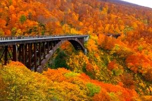 八甲田 城ヶ倉渓谷の紅葉と城ヶ倉大橋の写真素材 [FYI02099713]
