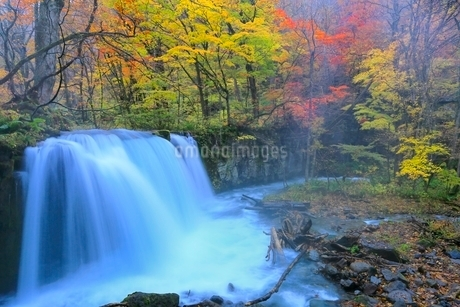 奥入瀬渓流 銚子大滝と紅葉の写真素材 [FYI02099724]