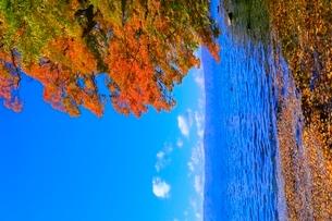 十和田湖 子ノ口の紅葉の写真素材 [FYI02099770]