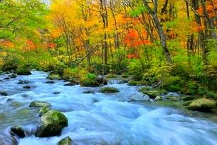 奥入瀬渓流の紅葉の写真素材 [FYI02099790]