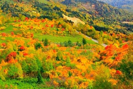 八幡平アスピーテラインの紅葉の写真素材 [FYI02099895]