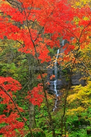 奥入瀬渓流の紅葉と不老の滝の写真素材 [FYI02100020]