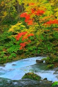 奥入瀬渓流の紅葉の写真素材 [FYI02100060]