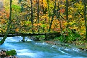 奥入瀬渓流の紅葉の写真素材 [FYI02100093]