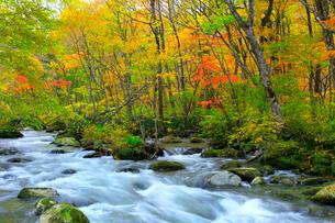 奥入瀬渓流の紅葉の写真素材 [FYI02100115]