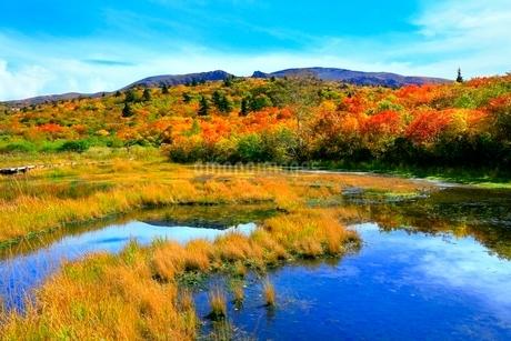 栗駒山 紅葉の湿原の写真素材 [FYI02100142]