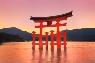 宮島夕景 厳島神社の大鳥居の写真素材 [FYI02100162]
