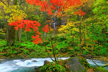 奥入瀬渓流の紅葉と不老の滝の写真素材 [FYI02100187]