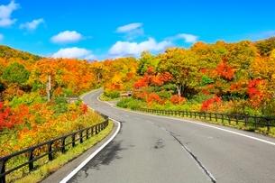 八幡平アスピーテラインの紅葉の写真素材 [FYI02100206]