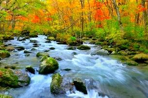 奥入瀬渓流の紅葉の写真素材 [FYI02100212]