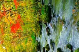 奥入瀬渓流の紅葉の写真素材 [FYI02100216]