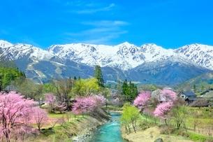 桜咲く白馬大出の姫川と白馬三山の写真素材 [FYI02100217]
