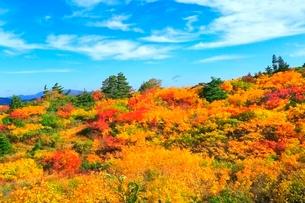 栗駒山 須川高原の紅葉の写真素材 [FYI02100220]