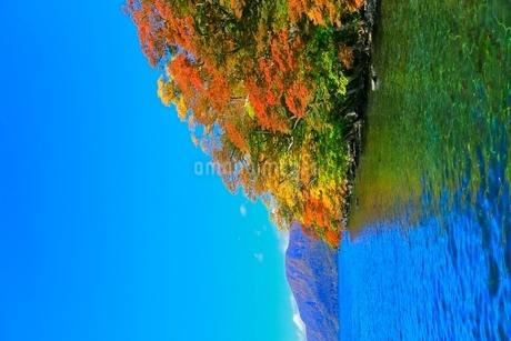 十和田湖 子ノ口の紅葉の写真素材 [FYI02100231]