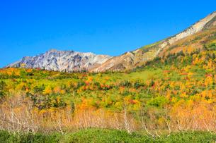 栂池自然園の紅葉と白馬岳の写真素材 [FYI02100252]