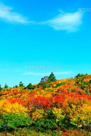栗駒山 須川高原の紅葉の写真素材 [FYI02100255]