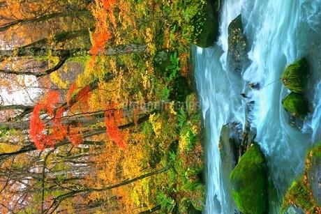 奥入瀬渓流の紅葉の写真素材 [FYI02100271]