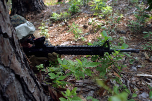 Marine uses a tree for cover and concealment while providingの写真素材 [FYI02100278]