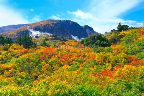 栗駒山 名残ヶ原の紅葉の写真素材 [FYI02100303]
