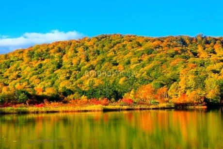 八幡平 大沼の紅葉の写真素材 [FYI02100315]