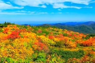 栗駒山 須川高原の紅葉の写真素材 [FYI02100324]