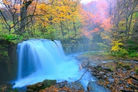 奥入瀬渓流 銚子大滝と紅葉の写真素材 [FYI02100344]