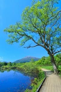 いもり池と黒姫山に道の写真素材 [FYI02100345]