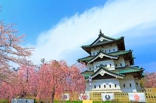 弘前公園の桜の写真素材 [FYI02100347]