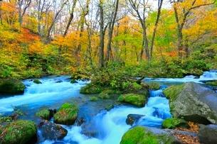 奥入瀬渓流の紅葉の写真素材 [FYI02100421]