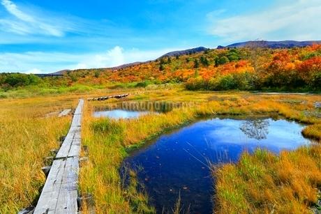 栗駒山 紅葉の湿原と木道の写真素材 [FYI02100438]