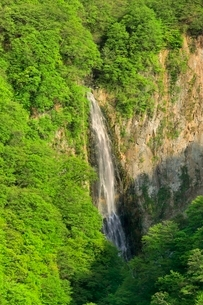 新緑の澗満滝の写真素材 [FYI02100537]