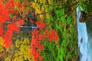 奥入瀬渓流の紅葉と不老の滝の写真素材 [FYI02100595]