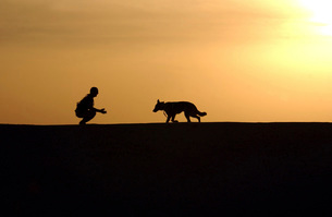 A military working dog and his handler spend time together.の写真素材 [FYI02103078]