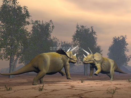 Confrontation between two Triceratops.のイラスト素材 [FYI02103584]