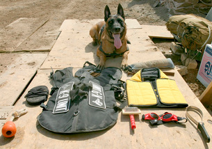 A military police dog sits beside his issued protective gearの写真素材 [FYI02104148]