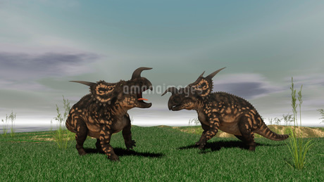 Two brown Einiosaurus dinosaurs confront each other in an open field.のイラスト素材 [FYI02104271]