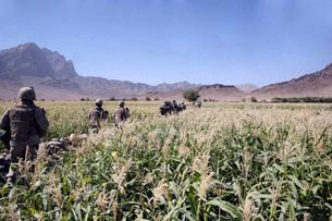 Soldiers walking through a wheat field in Afghanistan.の写真素材 [FYI02104323]