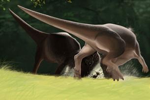 Confrontation between two Pachycephalosaurus dinosaurs.のイラスト素材 [FYI02104427]