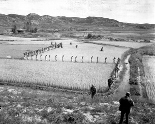 North Korean prisoners march single file across a rice paddyの写真素材 [FYI02104446]