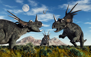 Confrontation between male Styracosaurus dinosaurs.のイラスト素材 [FYI02104520]