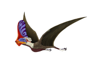 Tapejara, a genus of Brazilian pterosaur from the Cretaceous Period.のイラスト素材 [FYI02105762]