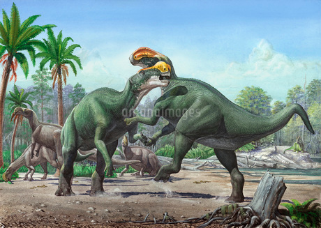 Conflict between two male Altirhinus kurzanovi dinosaurs.のイラスト素材 [FYI02105879]