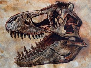 Tyrannosaurus rex dinosaur skull.のイラスト素材 [FYI02106820]