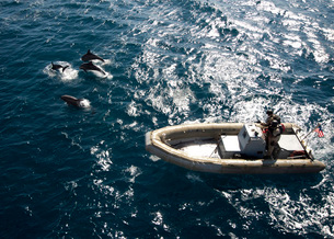 An inflatable boat travels alongside dolphins in the Atlantic Ocean.の写真素材 [FYI02107578]