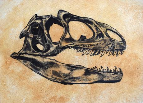 Allosaurus dinosaur skull.のイラスト素材 [FYI02107647]